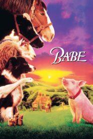 Babe – świnka z klasą